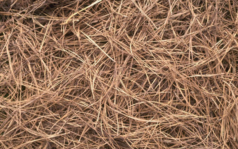 Pine Straw Landscape Mulch For Sale North Fort Myers