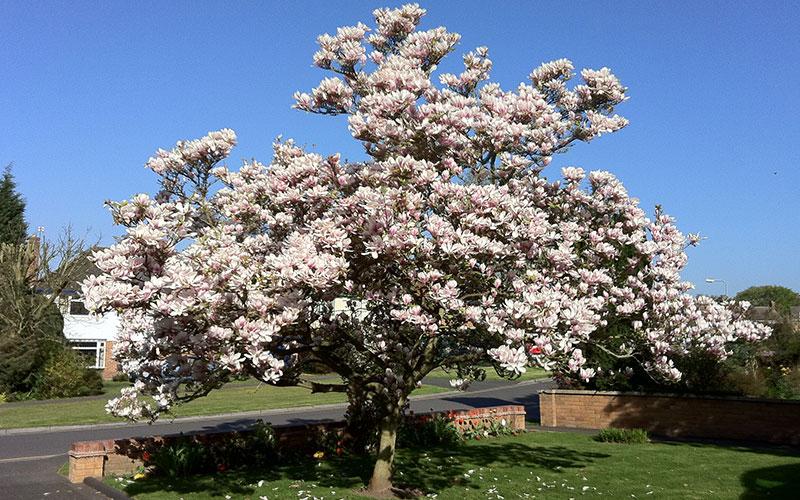 Tree Nursery North Fort Myers